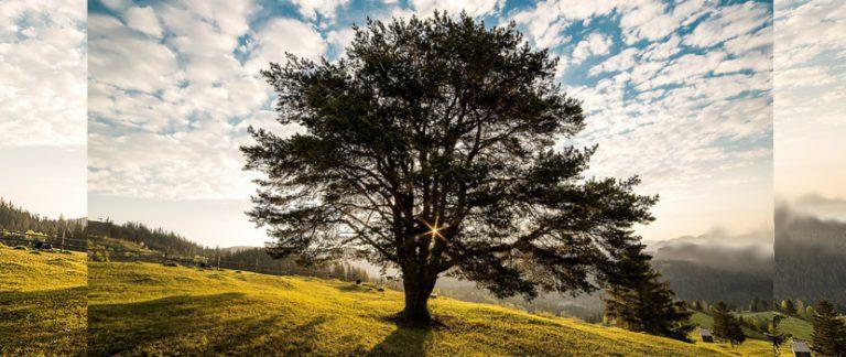 Árbol destacado en un gran paisaje